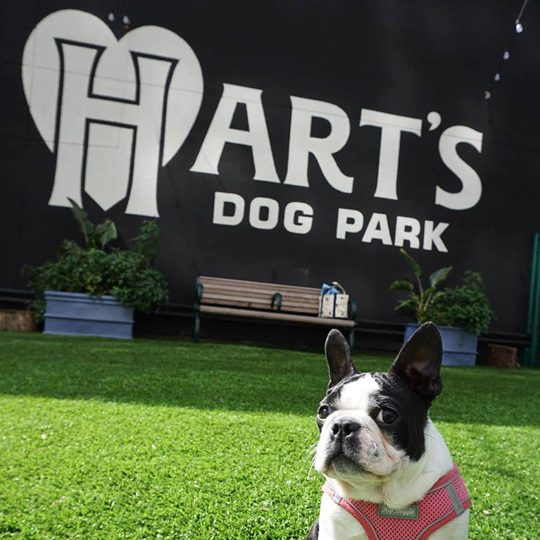 Hart's Dog Park in Downtown San Jose